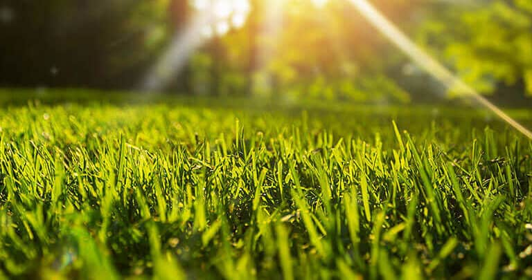 Photo of Lawn Equipment: Get The Most Out Of It